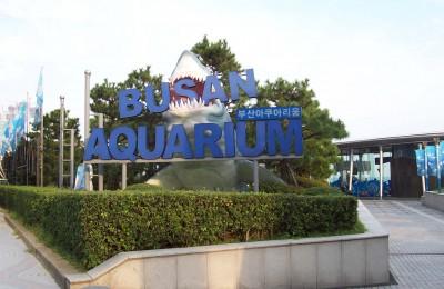 Busan_Aquarium